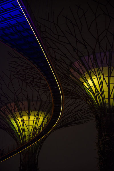 Supertrees Colours Supertree Grove Architecture Close-up Curve Gardensbythebay Illuminated Low Angle View Modern Nature Night No People Outdoors Road Sinagpore Singaporebynight Sky Supertrees Singapore Tree