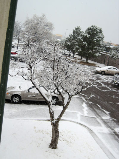 Snowy Tree Parking Lot Los Cruces, New Mexico