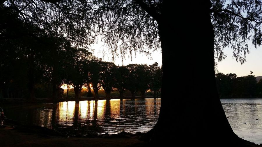Tree Sunset Dark Water And Sunset Tree Water Silhouette Reflection Lake Sky