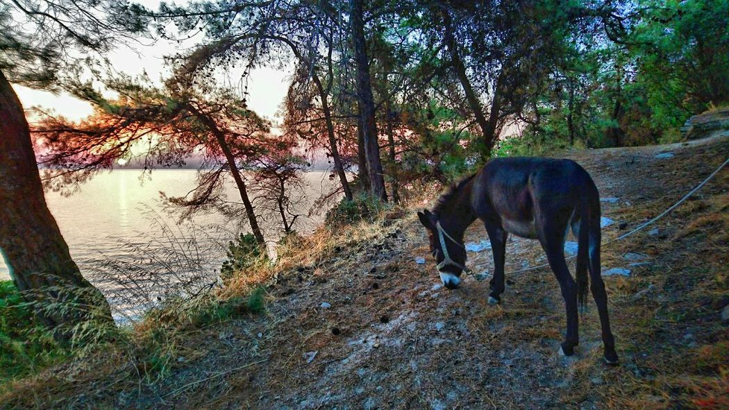 Море Greek Island TassosIsland One Animal No People Donky