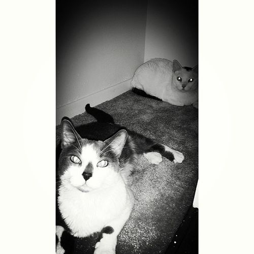 Blackandwhite Catlovers Cats Hiding Out InTheCloset Scardycat Blackandwhite Photography