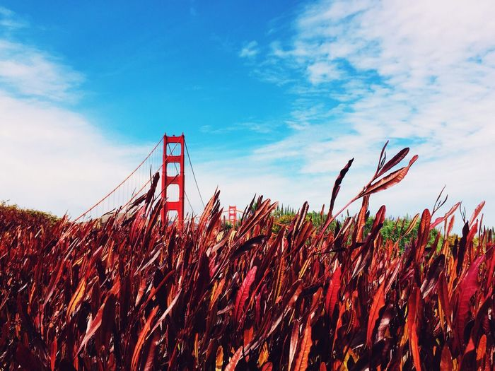 It was stunning walking on the iconic bridge! Check This Out San Francisco F3 Filter IPhoneography Nature Landscape Perspectives Hiking Outdoors