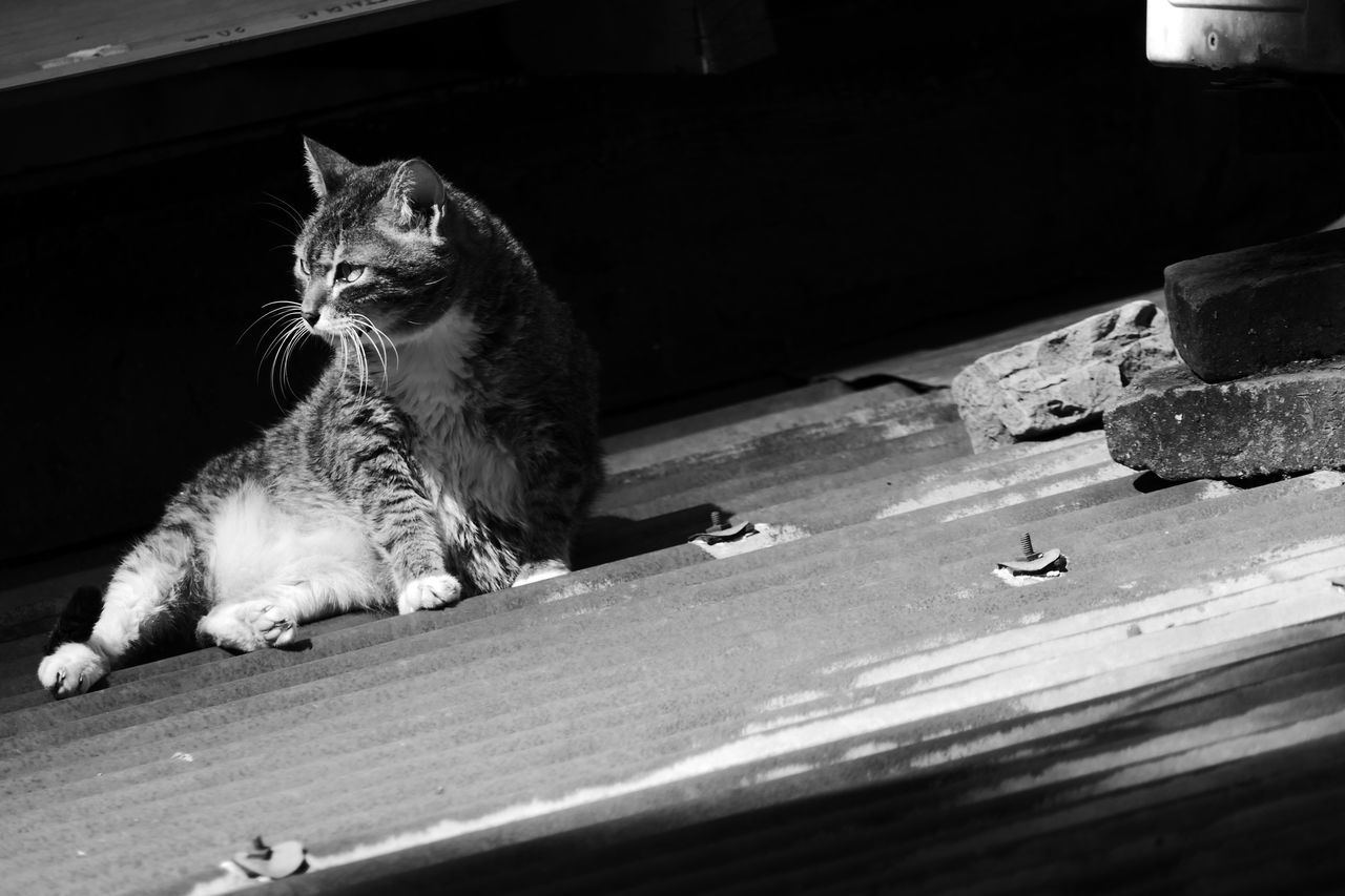 domestic cat, domestic animals, animal themes, pets, mammal, feline, one animal, indoors, no people, day, close-up