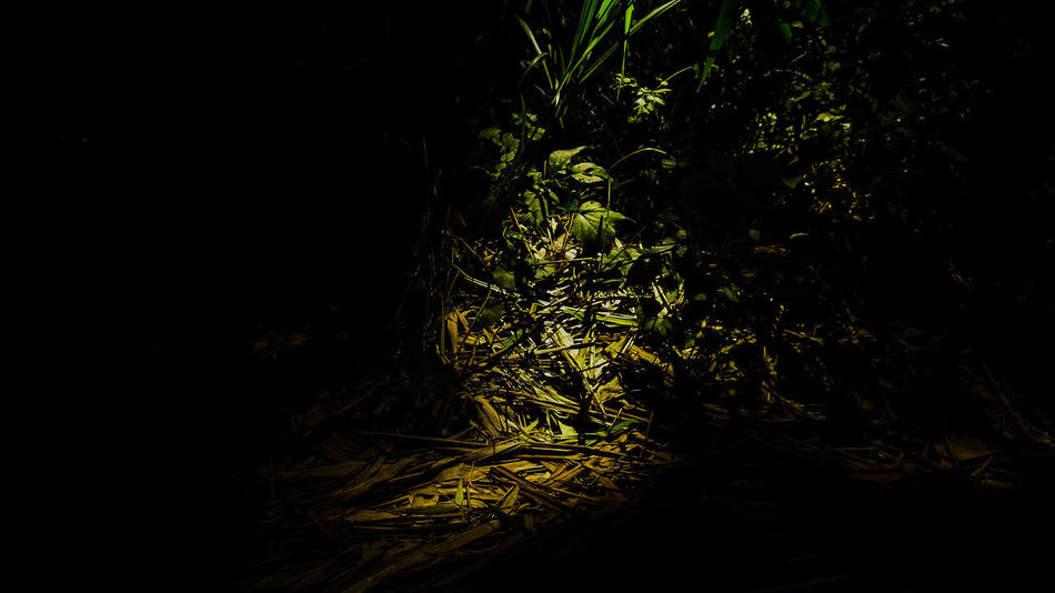 Darkness Nature XperiaM5 Leefs Relaxing Black Background Parks Bamboo Forest Nofilter