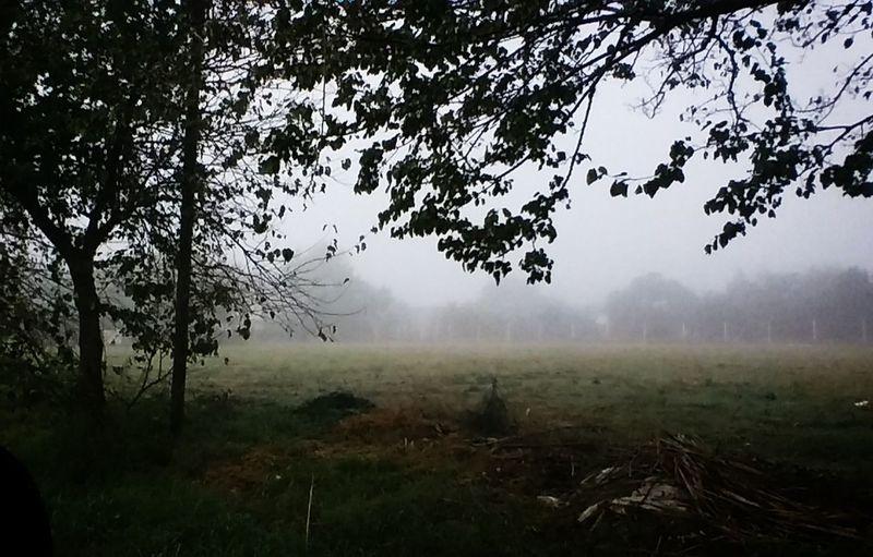 Otoño 🍁 Niebla