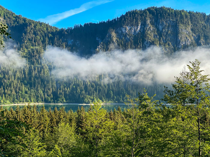 Scenic view of sylvensteinstausee in forest against bavarian mountains and sky