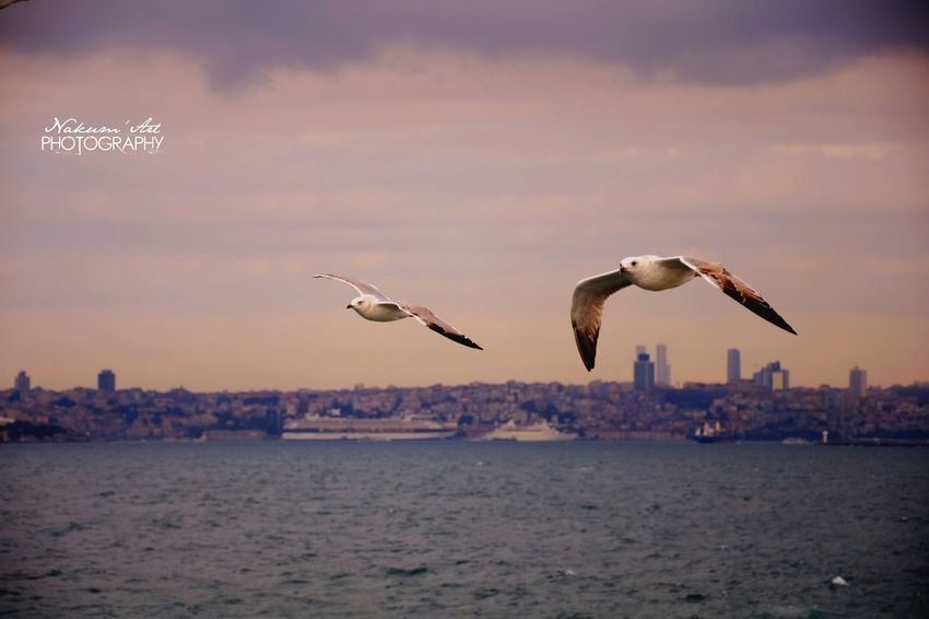 Fliying Birds MyPhotography Sky And Clouds Landscape Nature Water Reflections Flying High Clouds And Sky Animals EyeEm Birds