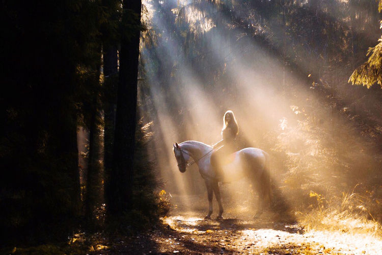 View of horses in the forest