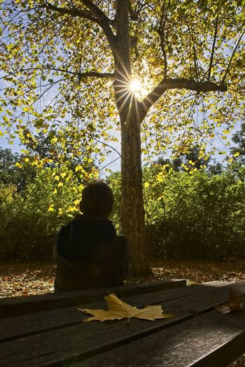 A woman contemplates the sun over a park in autumn Tree Sunlight Plant Nature Rear View Sunbeam One Person Real People Day Sun Lens Flare Sitting Sunny Outdoors Leaf Bench Sun Rays Sun Star Autumn Colors Yellow Backlight Silhouette Leaves Contemplation