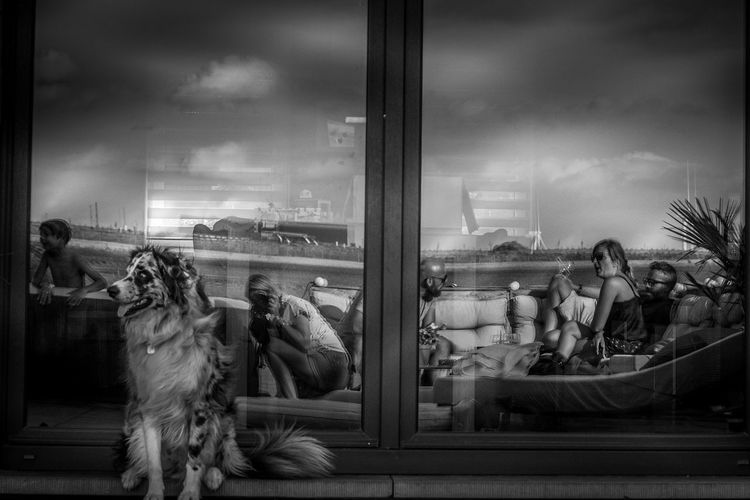 View of dogs on window