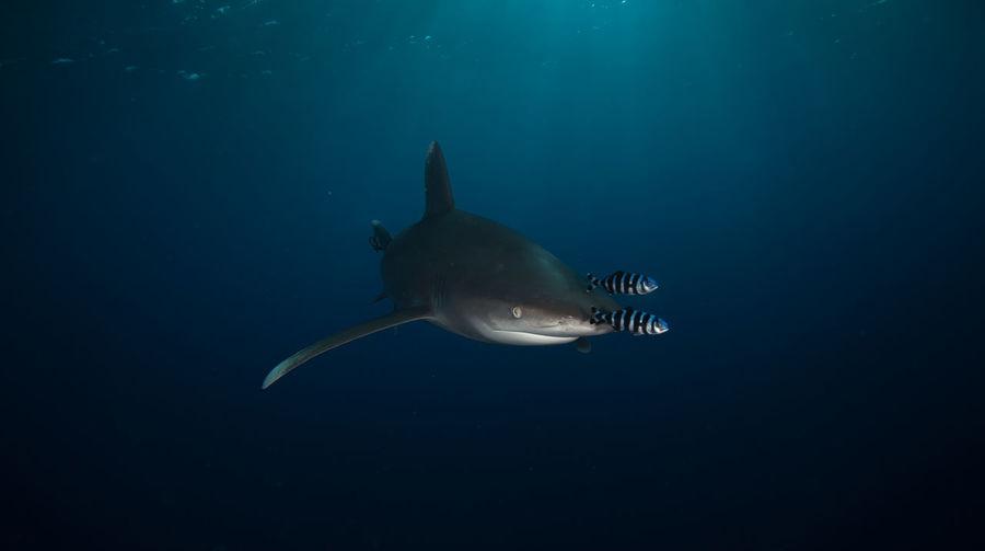 Sea life undersea