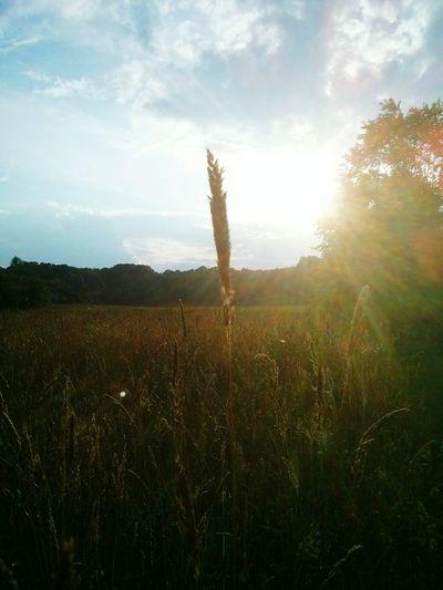 Sunsets... Nature