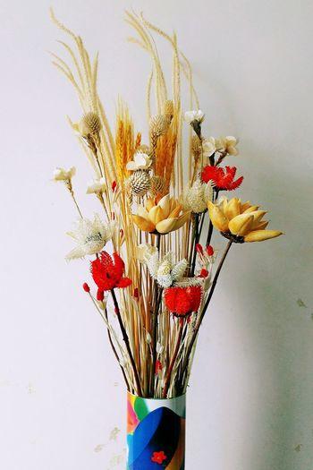 自己插的🌸😃Flower White Background Multi Colored Beauty In Nature Red Light And Shadow T&C Vision 365 Project Of Virgolcj 行色视觉 PhonePhotography Art, Drawing, Creativity ArtWork Honor 7i Huawei