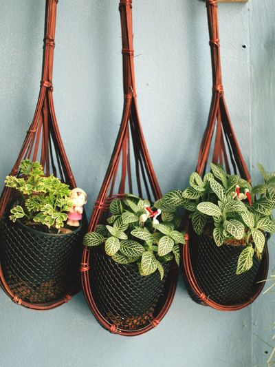 High angle view of potted plants hanging against wall