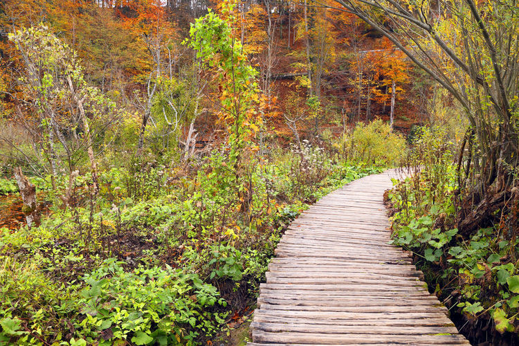 Boardwalk amidst trees at plitvice lakes national park