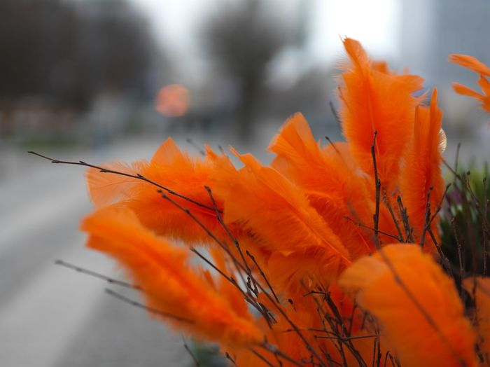 Photo shot with Hasselblad X1D Feather  Flowers Gothenburg Hasselblad Medium Format Orange Shallow Depth Of Field X1d