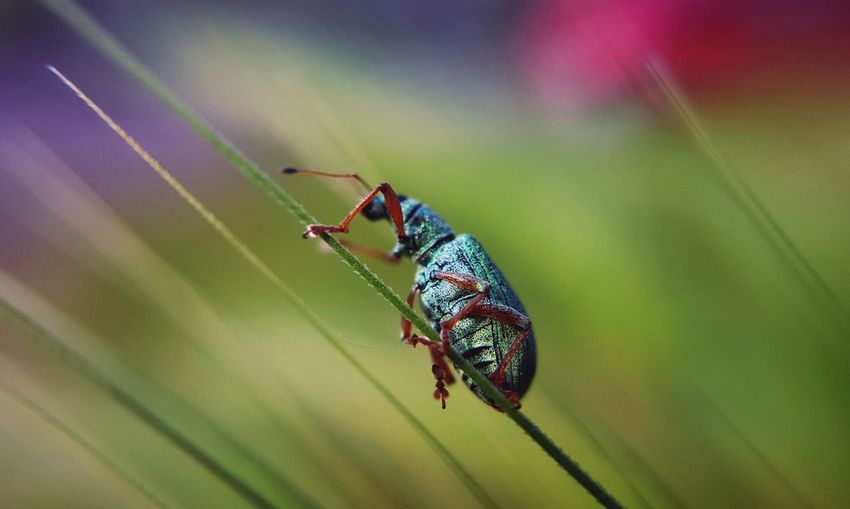 Close-up of bug on grass