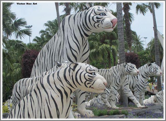 Victor Noc Art 🎱 Nong Nooch Tropical Bothanical Garden Thailandia 2016 Pattaya City Tigre 🐯 Bianca