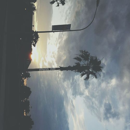 Sunset Palm Trees San Jose Eeyem Photography Sky And Clouds First Eyeem Photo