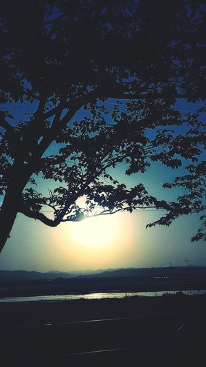 Silhouette Tree Nature Tranquility Reflection Outdoors Beauty In Nature Sky Landscape Sunset Water Scenics Tranquil Scene No People Beach Lake Star - Space Day Astronomy Galaxy