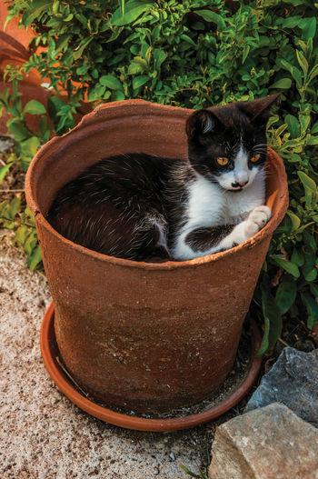 Portrait of a cat in backyard