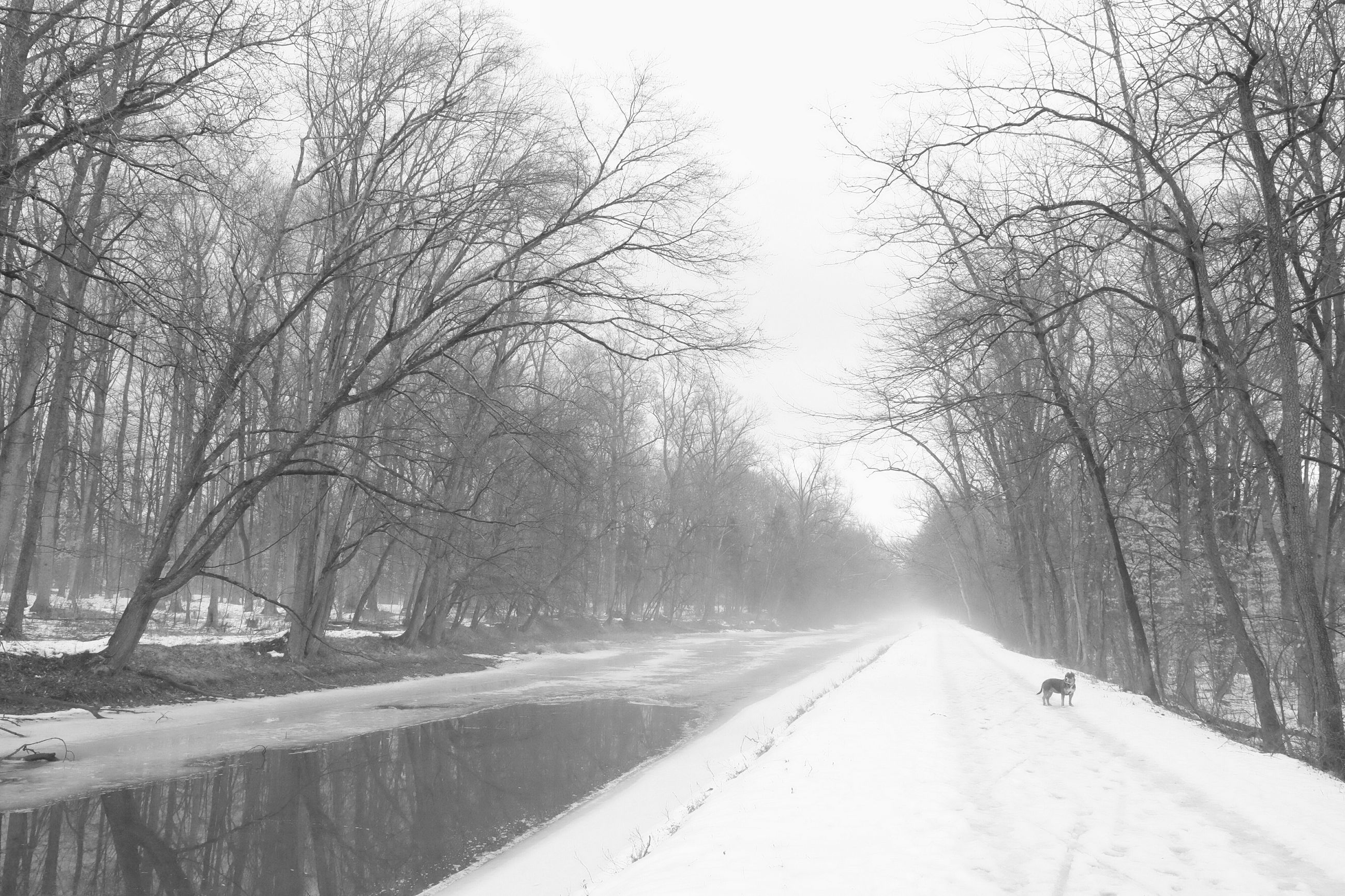 winter, snow, cold temperature, the way forward, tree, transportation, season, weather, road, diminishing perspective, bare tree, vanishing point, nature, covering, clear sky, street, frozen, branch, tranquility, tranquil scene
