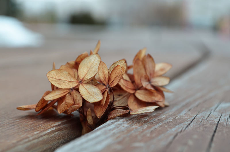 Close-up of dry leaves on table