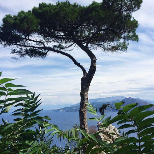 Villa Lysis Tree Nature Seasight Sea Landscape Capri, Italy