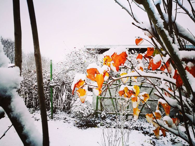 Winter Nature Outdoors Day No People Cold Temperature Growth Tree Close-up Sky Beauty In Nature Garden Love Coloured Leafs Shades Of Winter