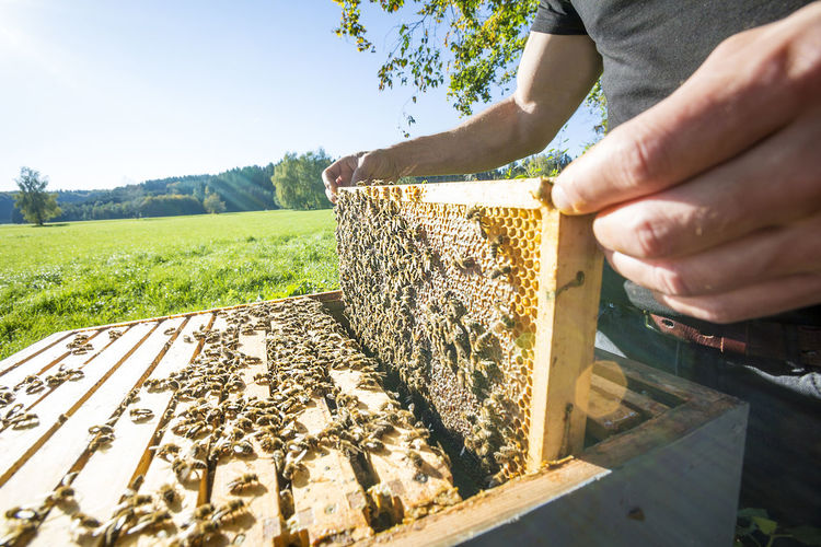 Midsection of man holding bees on honey comb at field