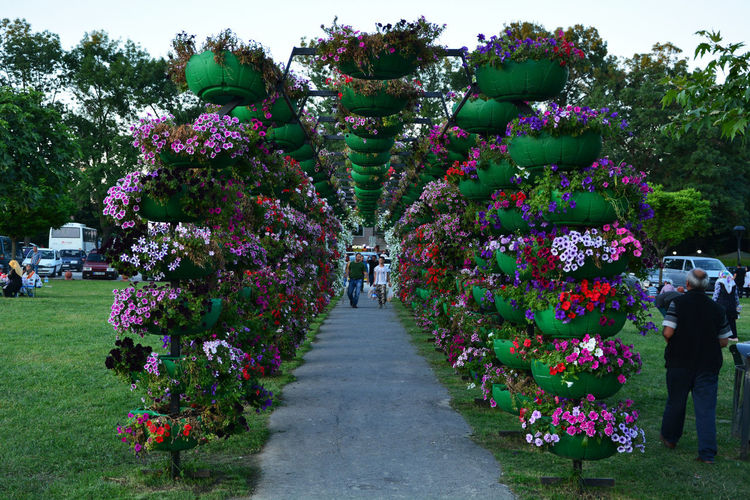Beauty In Nature Day Direction Flower Flowering Plant Fragility Freshness Group Of People Growth Incidental People Nature Outdoors Pink Color Plant Real People Rear View The Way Forward Transportation Tree Vulnerability