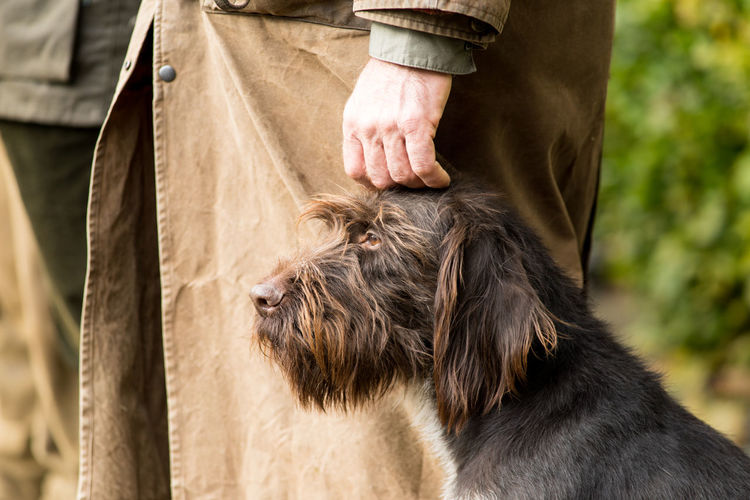 Portrait of a German wirehaired pointer sitting next to his owner the hunter being caressed Caress Hunter Love Obedience Animal Head  Bearded Best Friend Close-up Day Dog Domestic Animals Furry German Wirehaired Pointer Hand Hound Human Body Part Mammal One Animal Outdoors People Pets Pointer Real People Standing Thoroughbred The Great Outdoors - 2018 EyeEm Awards
