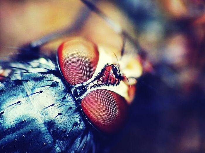 Macro Insect Macro Photography Monster Eyes