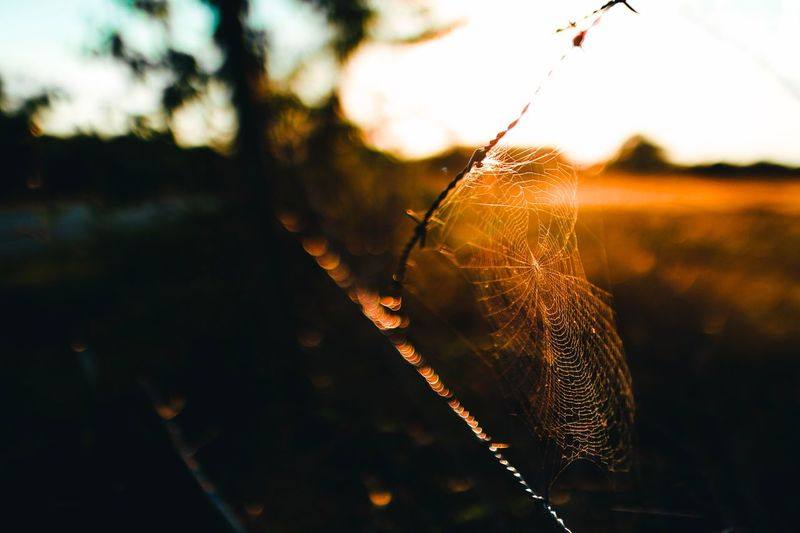 On the Fence || Focus On Foreground Spider Spider Web Outdoors Nature Insect Beauty In Nature Fragility Day Web Bokeh Sunset Rural Scene