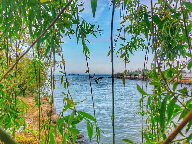 Samsun Karadeniz Türkiye Sahil Nature Yeşilırmak Manzara Sea Deniz