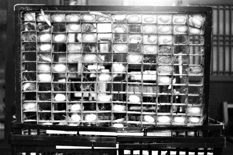 Cocooning Japan Large Group Of Animals Silkworm Until Black And White Bw Cage Close-up Cocoons Day Elmar 3.5cm F3.5 Epson R-D1 Indoors  Insect Leica Lens Monochrome Moth No People Silkworms Sleep Sleeps The Week On EyeEm