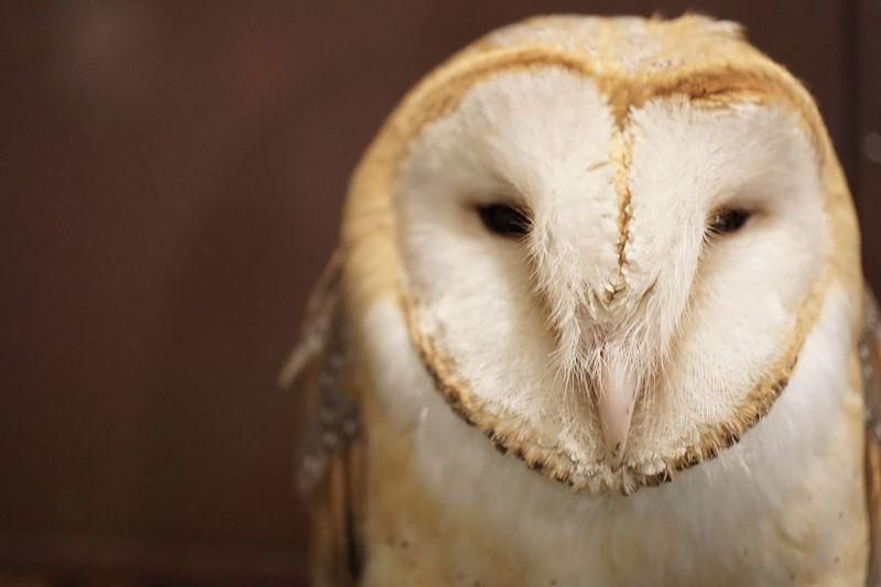 Nature Bird Of Prey Owl Bird One Animal Close-up No People Animal Themes Animals In The Wild Beak Animal Wildlife