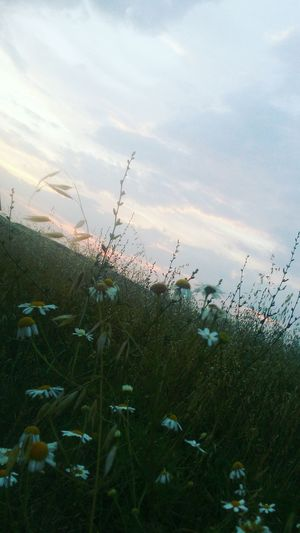 Sunset Cloud - Sky Sky Plant Nature Growth Flower No People Beauty In Nature Outdoors Scenics Day Cereal Plant Flower Head Water Fragility Freshness Close-up