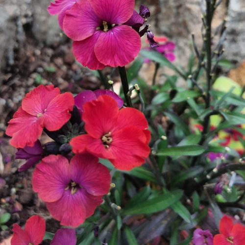 Close-up of pink flowering plant in back yard