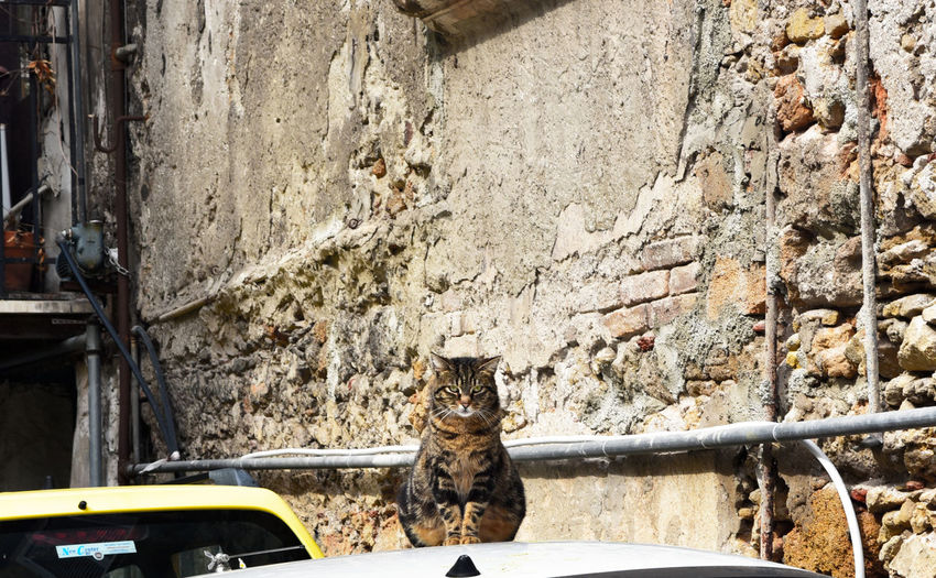 Portrait of cat sitting on car hood against weathered wall