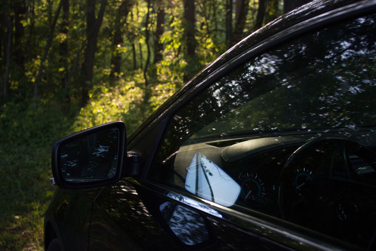 LaCrosse Lurkin Buick Car Forest Motor Vehicle Reflection Tree WoodLand