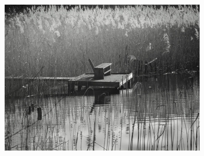 Bench,water,loneless Destruction In Nature Lake Little Bridge No Persons No Sky, Reflections In The Water Silence Of Nature