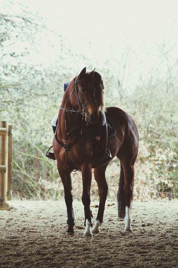 Ma gravure ❤️❤️ TDLJ Equestrian Horse La Plus Belle Bonheur Love