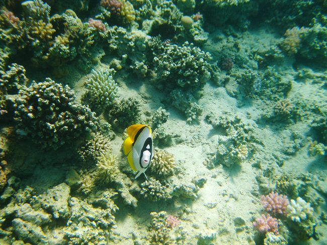 Fisch Face Swimming With The Fish Coralreef Holiday In Egypt Underwater Diving Time Egypt Diving Corals Hurghada Sea EyeEm Selects