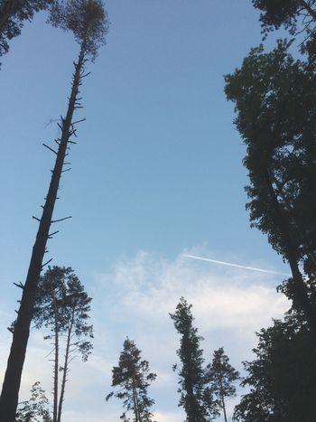 Tree Low Angle View Nature Forest Growth No People Day Sky Beauty In Nature Outdoors Branch Vapor Trail EyeEmNewHere