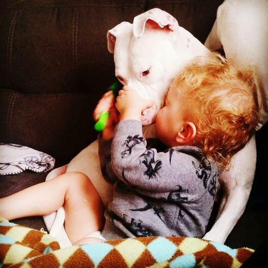 Baby Innocence Care Bonding Oregon Boy American Bulldog Pets Boys With Dimples A Boy And His Dog Blond Hair Blue Eyed Boy Childhood Animal Themes EyeEmNewHere