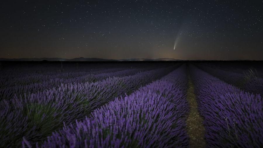 Neowise comet over lavander fields