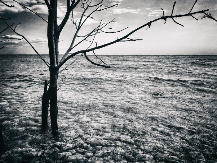 A tranquil scene looking out onto the frigid waters of Lake Michigan, from Mackinac Island Mackinac Island Peace And Quiet Samsung Galaxy S8 Photography Bare Tree Beauty In Nature Branch Horizon Horizon Over Water Monochrome Nature No People Plant Samsung Galaxy S8+ Scenics - Nature Tranquil Scene Tranquility Tree Water Waterfront