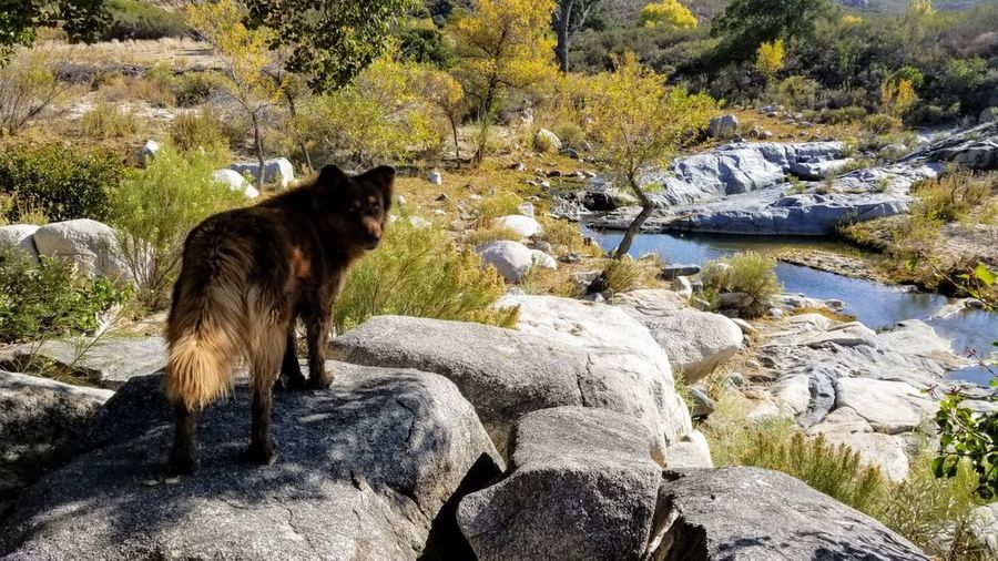 Sheep sitting on rock by lake