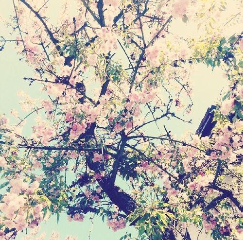 Summer #summertime #sun #TagsForLikes.com #hot #sunny #warm #fun #beautiful #sky #clearskys #season #seasons #instagood #instasummer #photooftheday #nature #TFLers #clearsky #bluesky #vacationtime #weather #summerweather #sunshine #summertimeshine